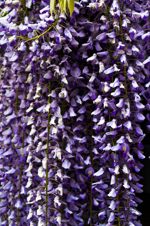 purple petaled flowers at daytime