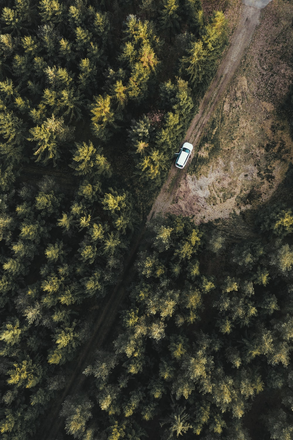 bird's-eye view photography of white car in forest