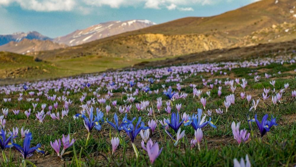purple petaled flowers under blue sky
