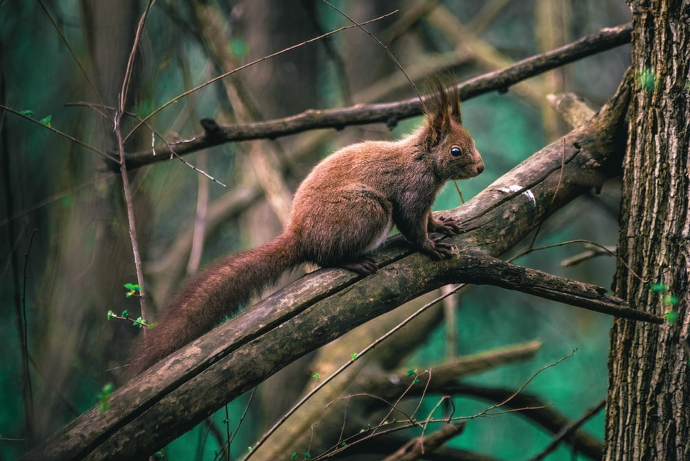 brown squirrel on branch of tree during daytime