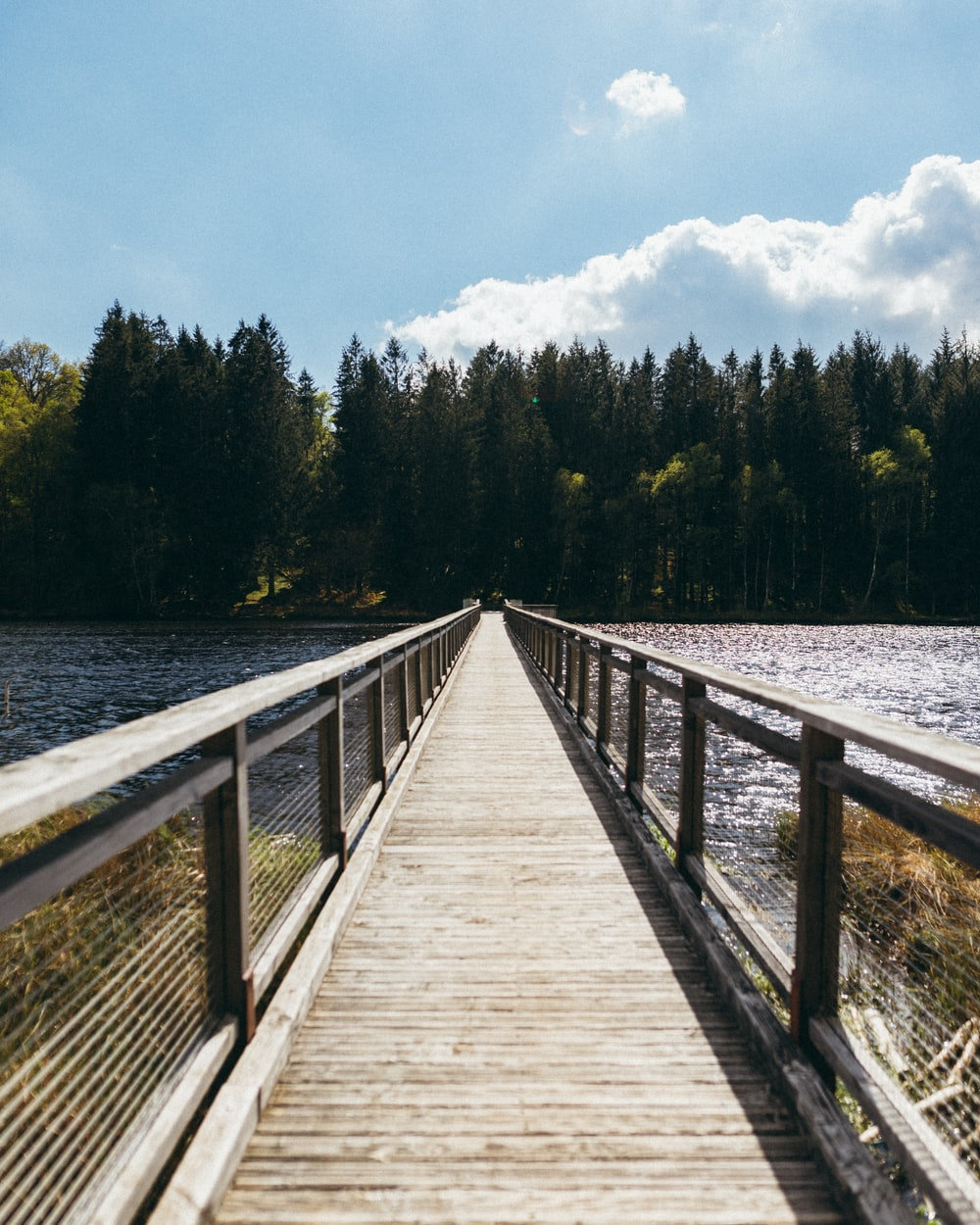 brown wooden bridge over body of water and forest during day