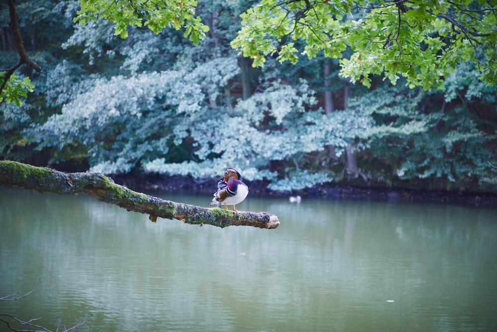 bird on branch near lake