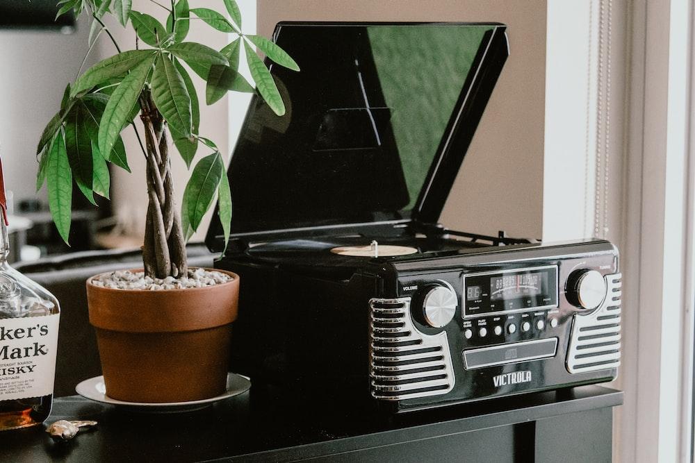 plant beside vinyl player