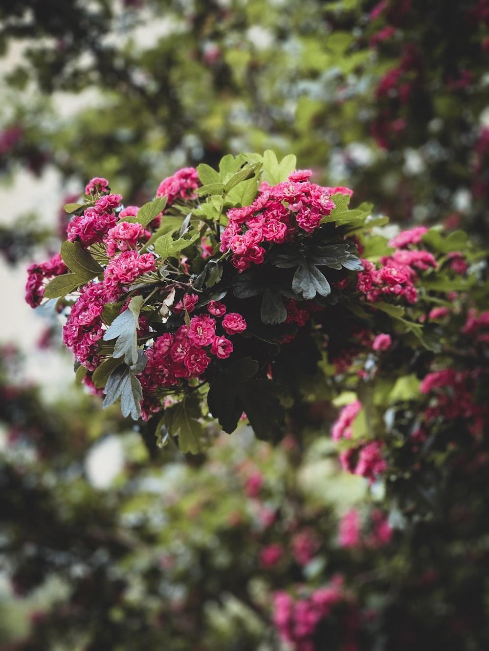 pink petaled rose flower lot