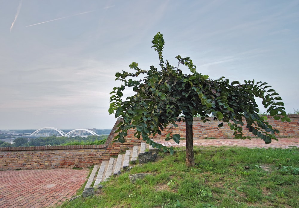 tree near grey stairs