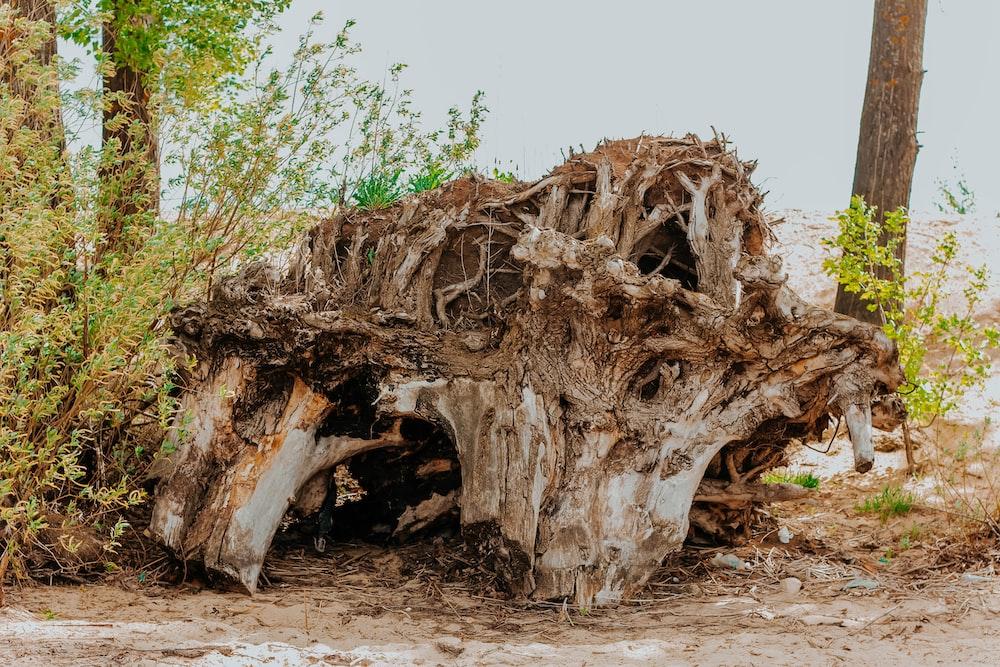 brown wood at daytime