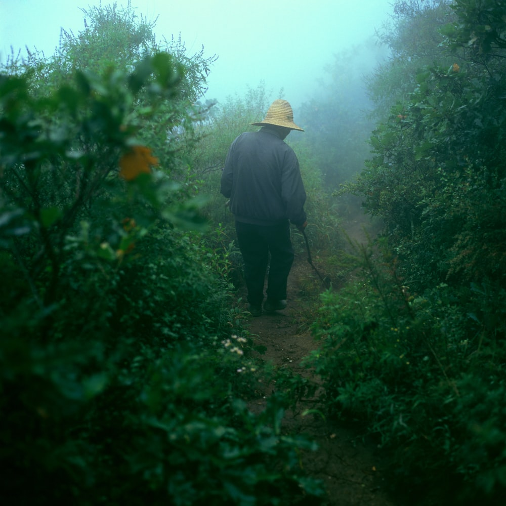 person walking in bushes with fog