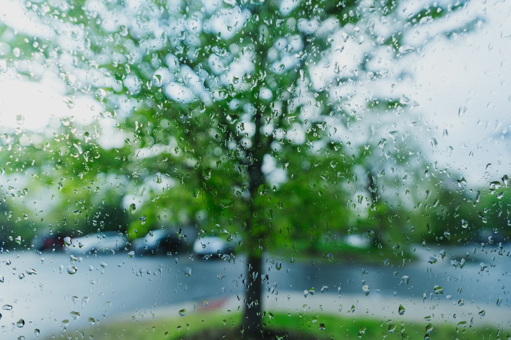 water droplets on glass viewing green tree