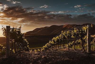 4728. Bor,szőlő, borászatok