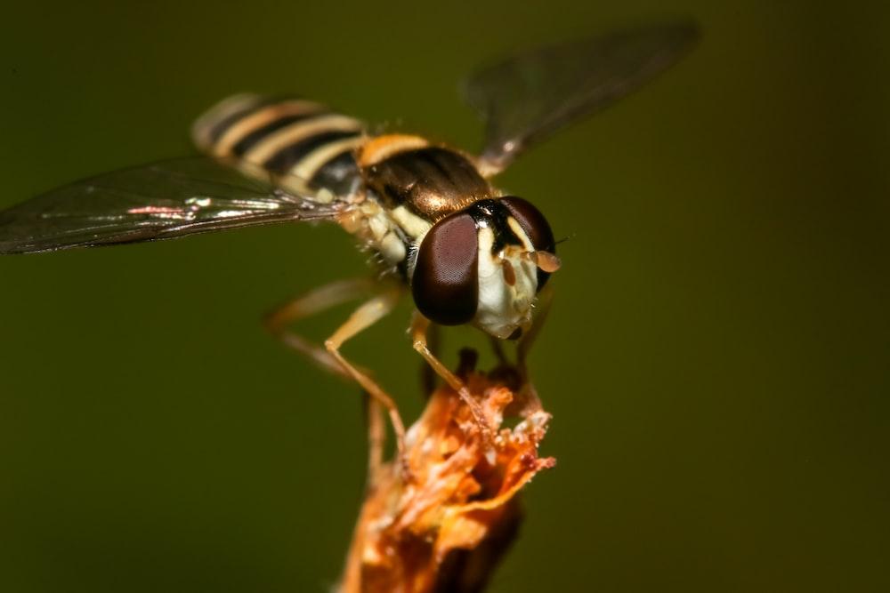 macro photography of fruitfly