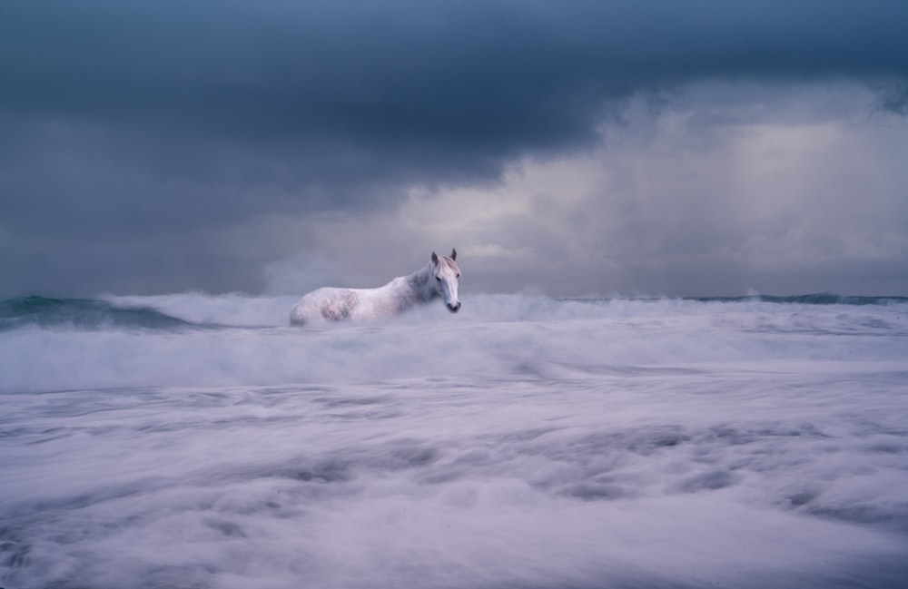 white horse on body of water