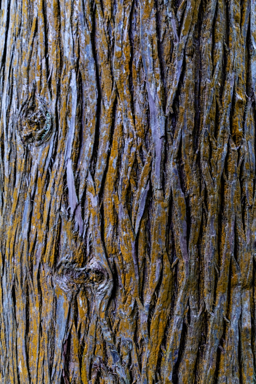 closeup photography of brown tree bark