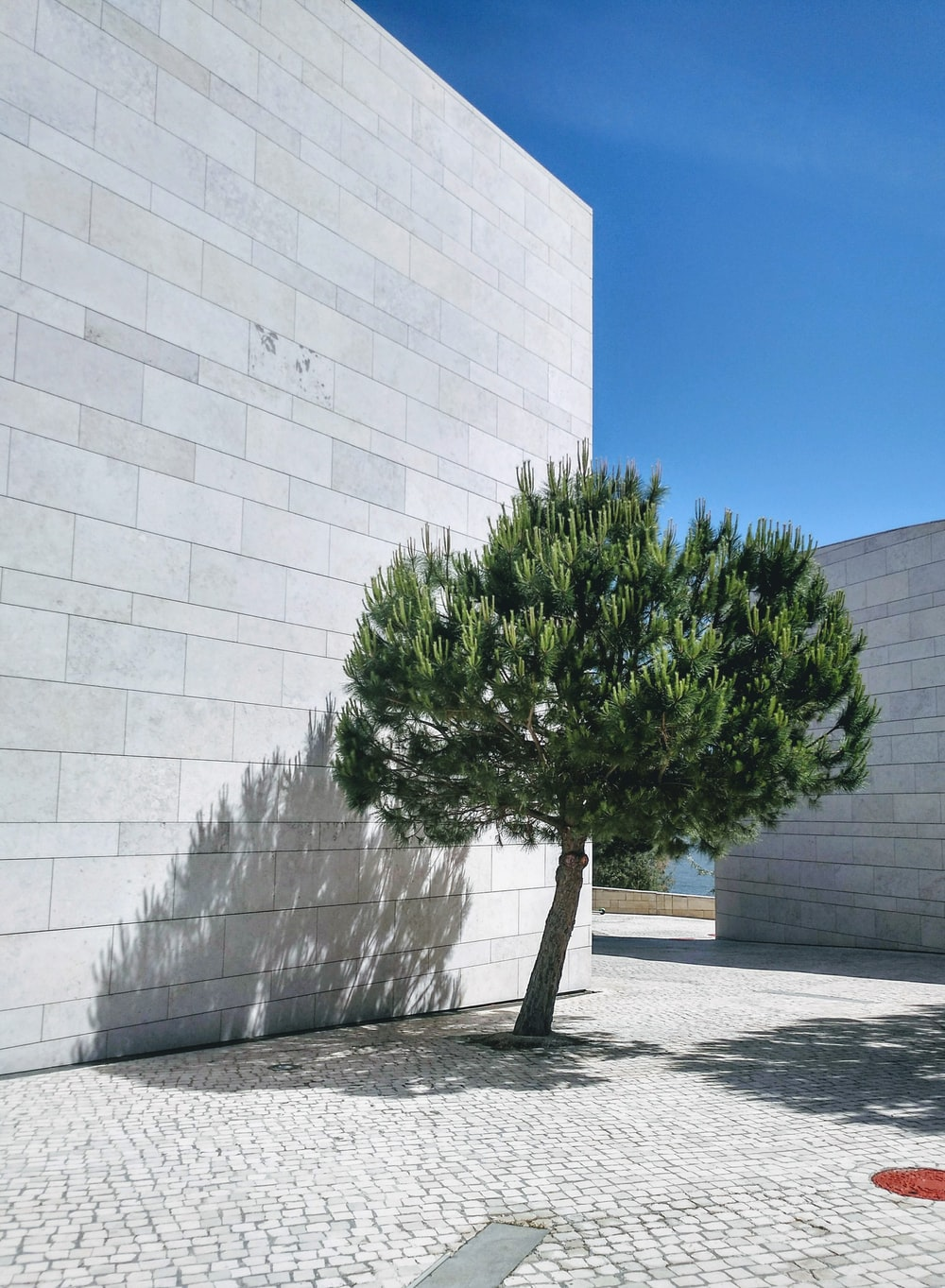tree beside white wall