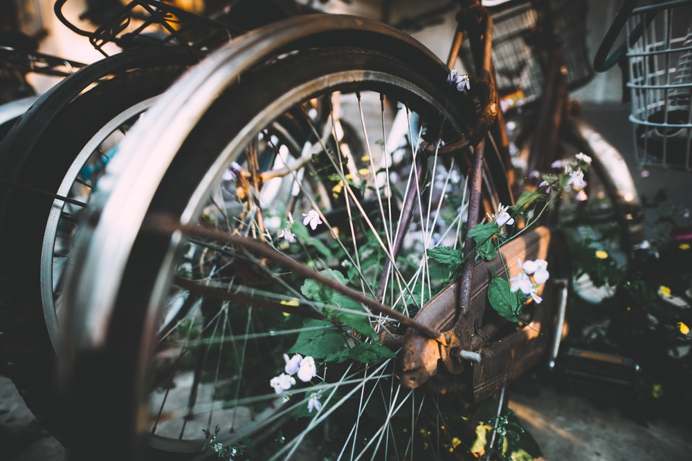 bicycle near plant