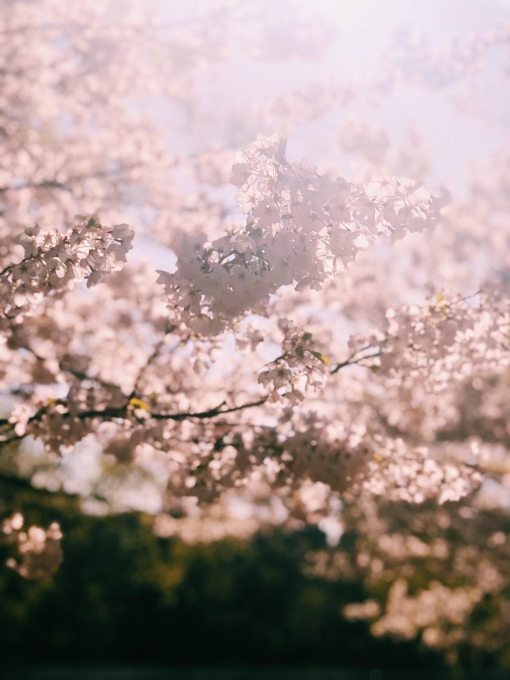 white-flowering tree