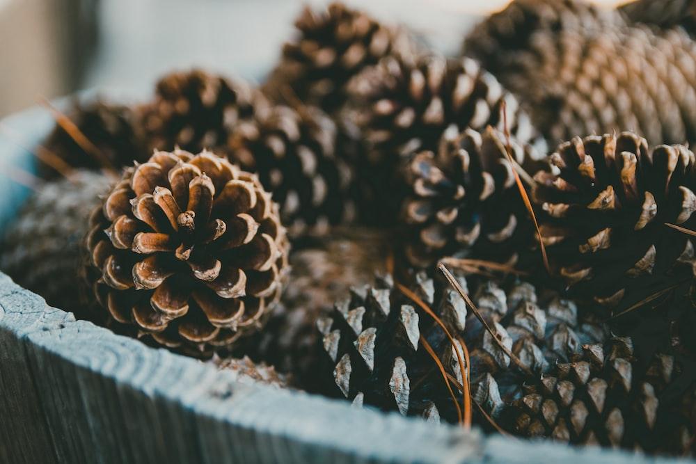 bucket of brown pine cones