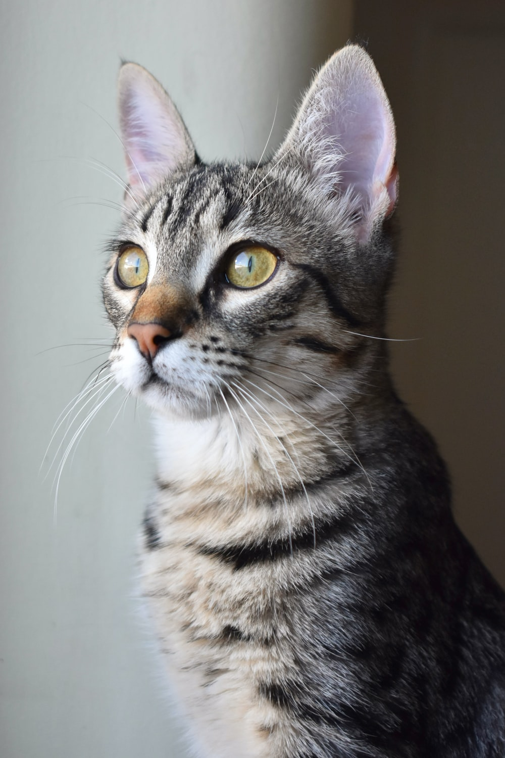 close-up photo of brown tabby kitten