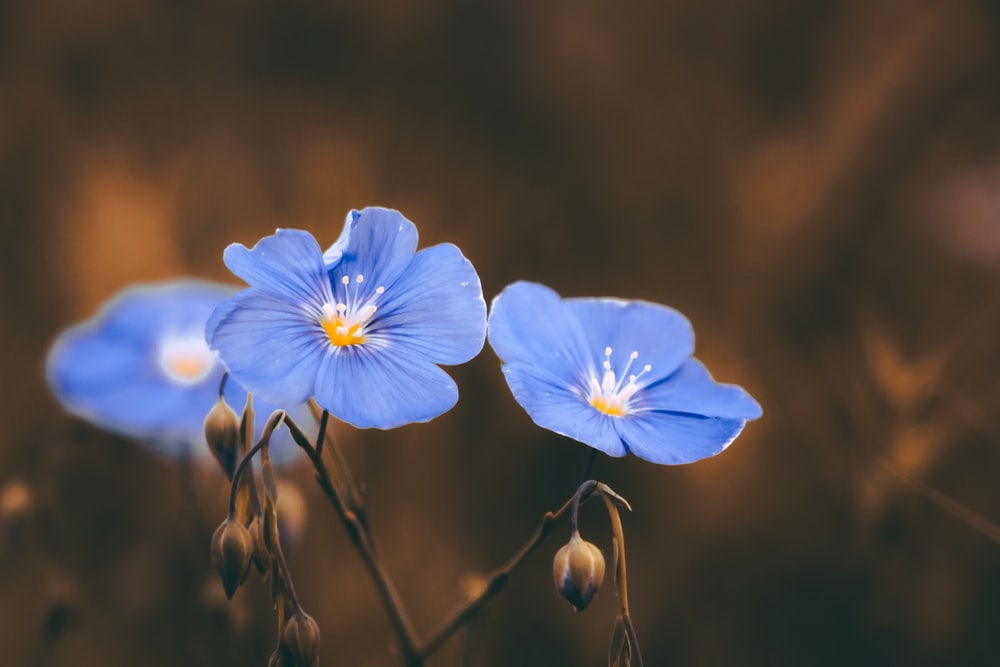 blue petaled flower close-up photography