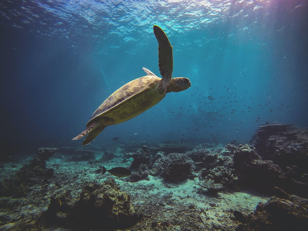 brown turtle on the ocean photography