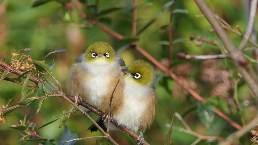 two beige birds