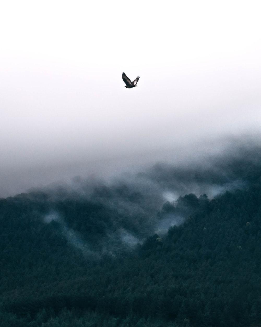 bird flying near mountain during daytime