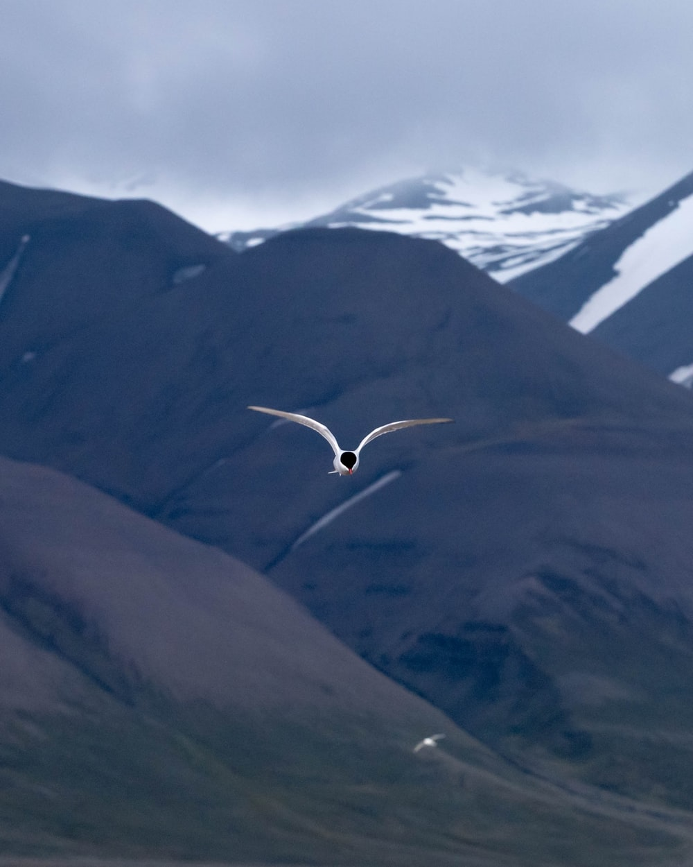 time lapse photography of bird in flight over mountains