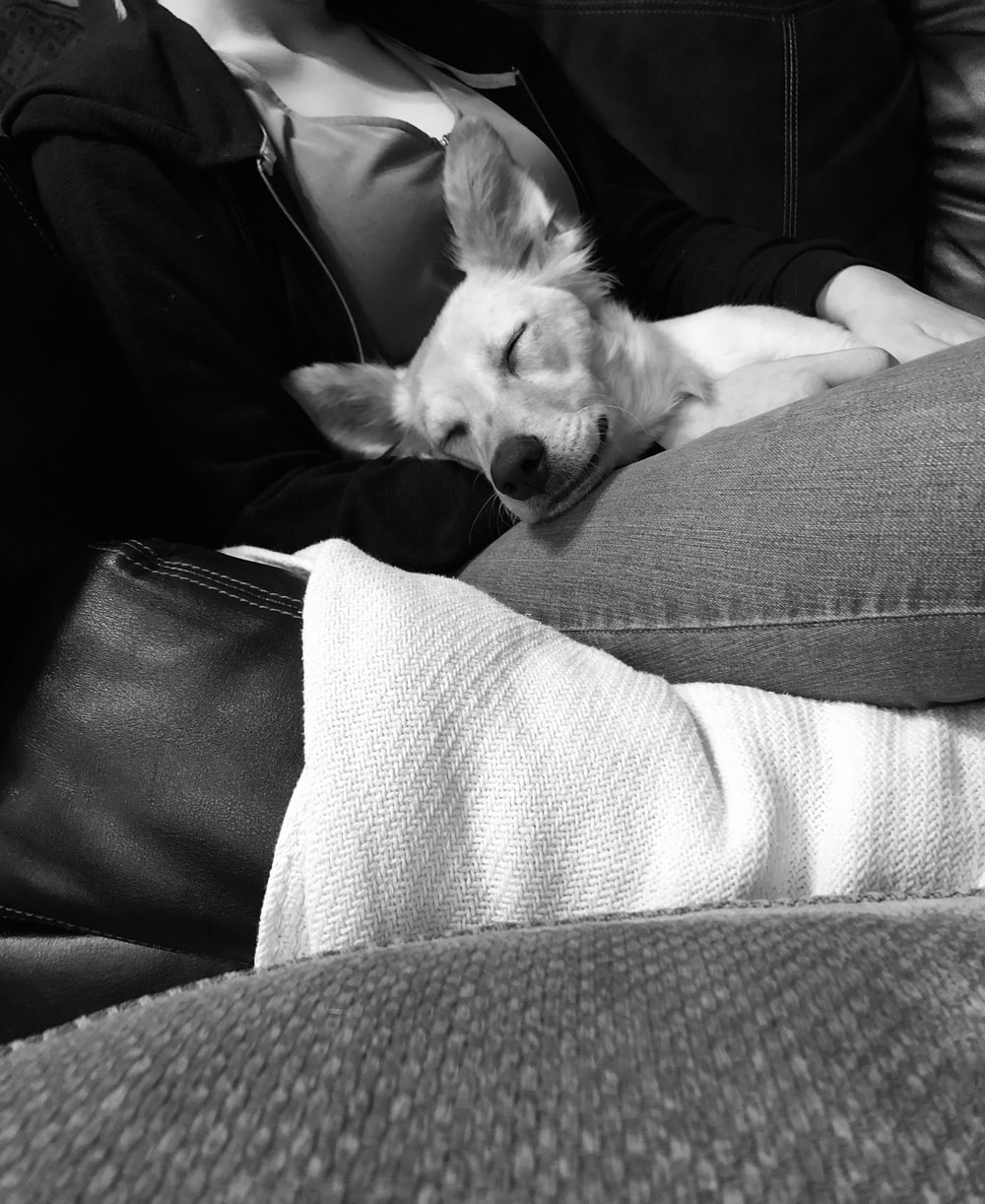 grayscale photography of dog sleeping on woman's lap