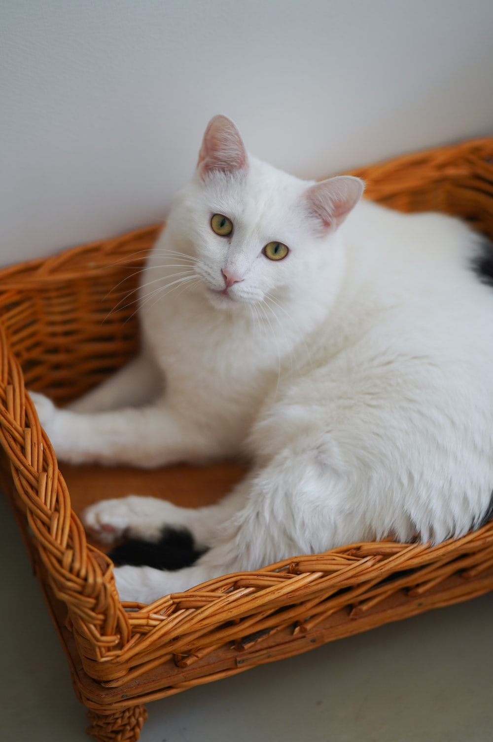 shallow focus photo of white cat lying on brown wicker tray