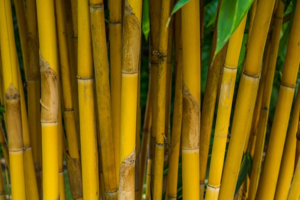 closeup photo of bamboo tree