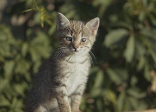 brown tabby kitten near green leaf plant
