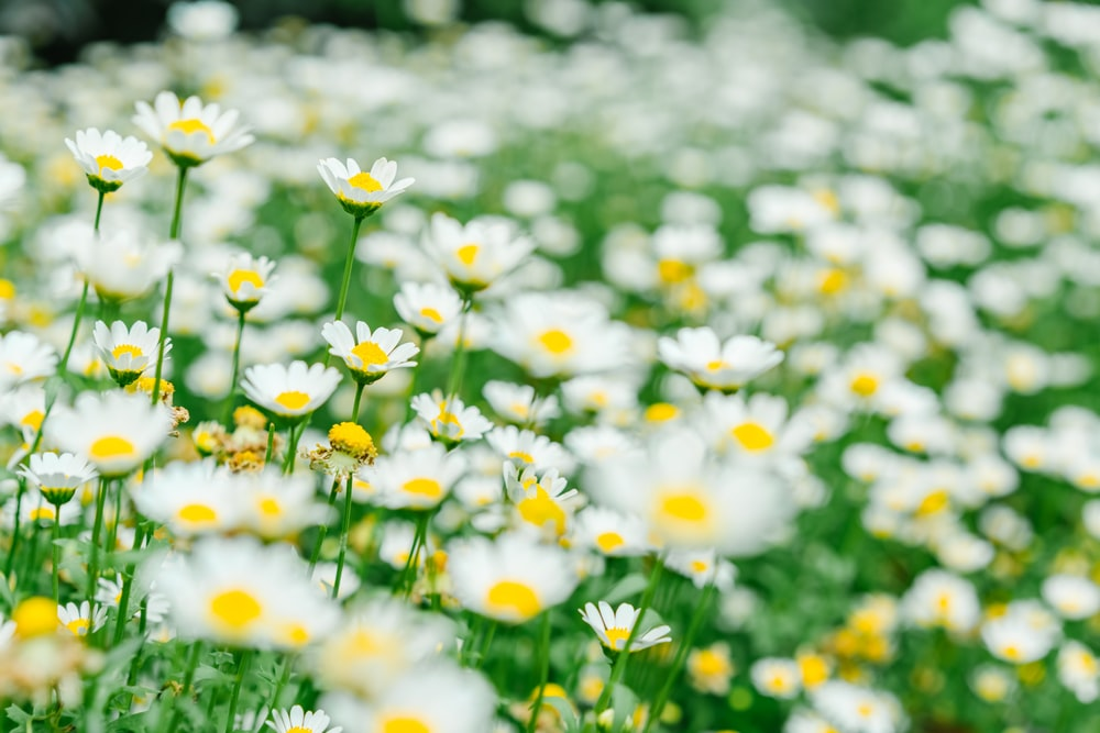 white and yellow flowers in bloom