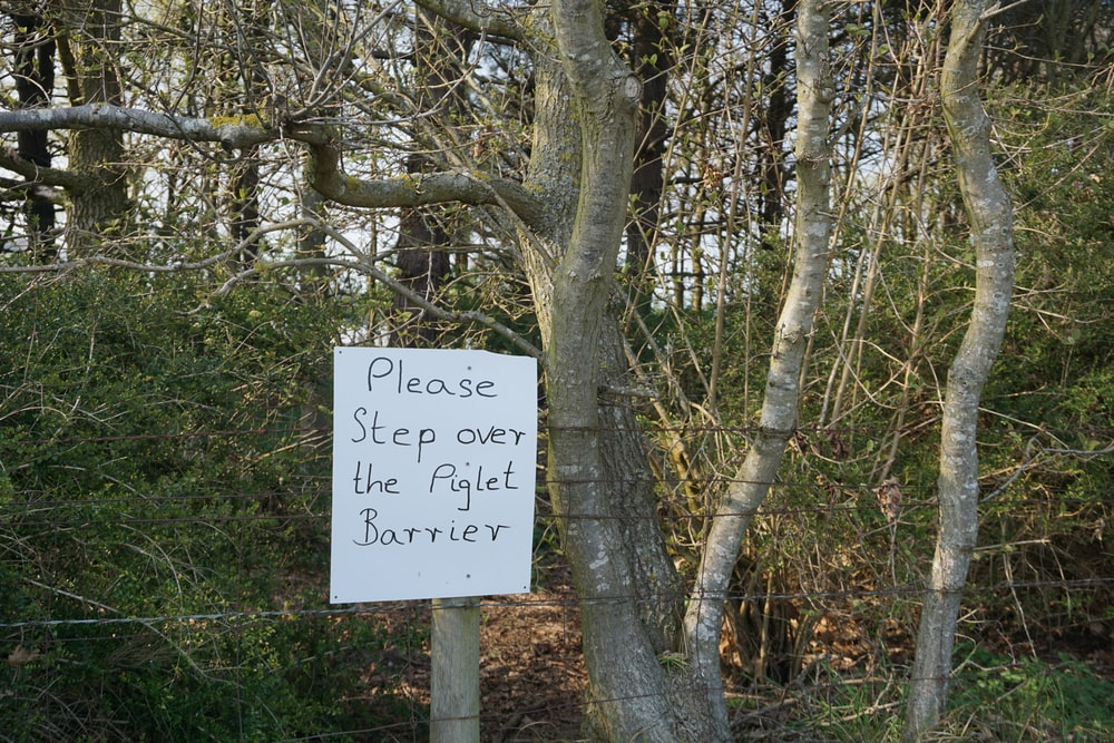 please step over the piglet barrier near tree
