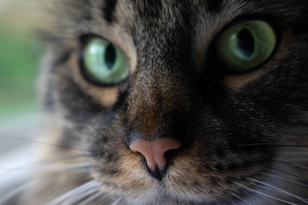 close up photography of cat