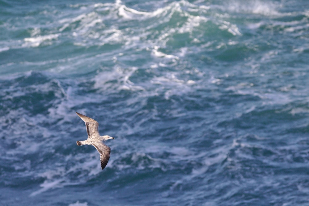 seagull flying above body of water