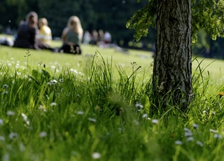 selective photo of grass field on parkr
