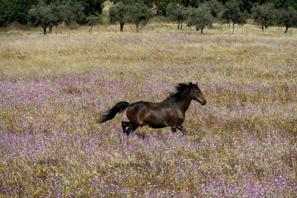 brown horse running on field