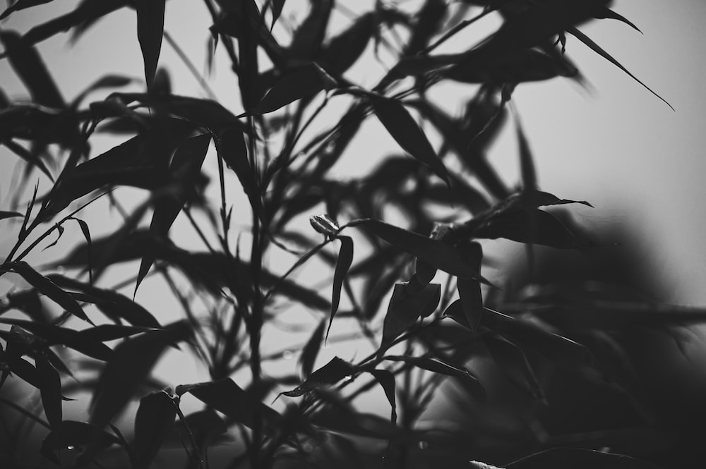 grayscale photo of leafed plant