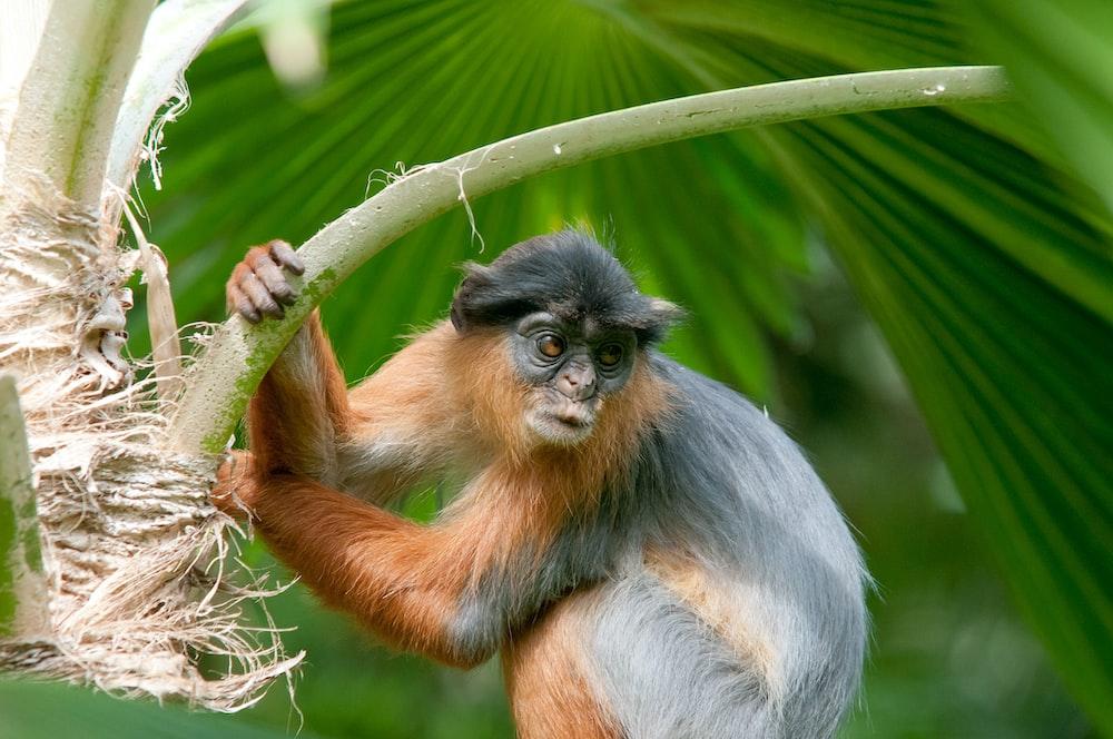 primate on tree