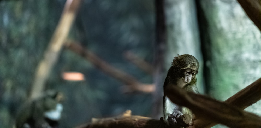 selective focus photography of gray monkey