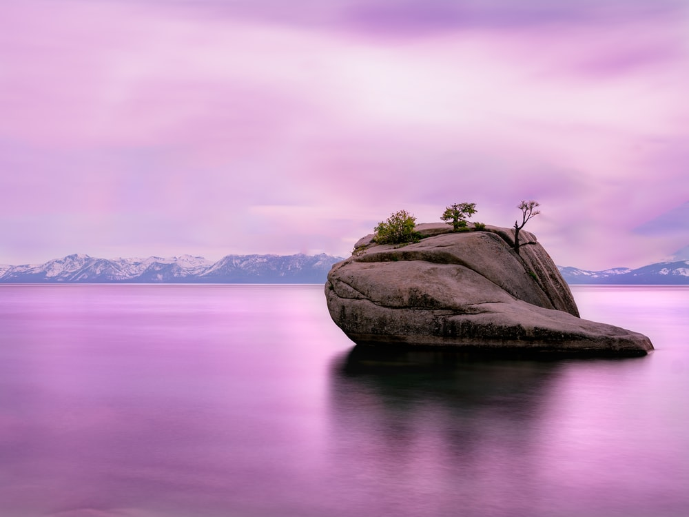 trees growing on rock on lake