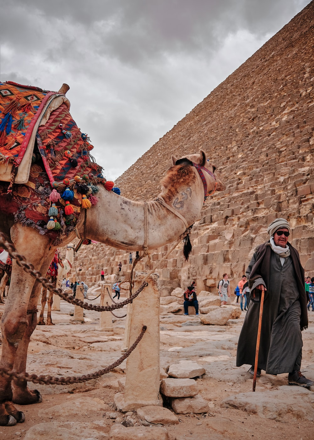 man standing beside brown camel