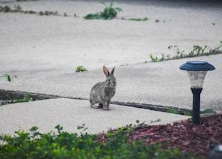 gray rabbit beside lamp post during daytime