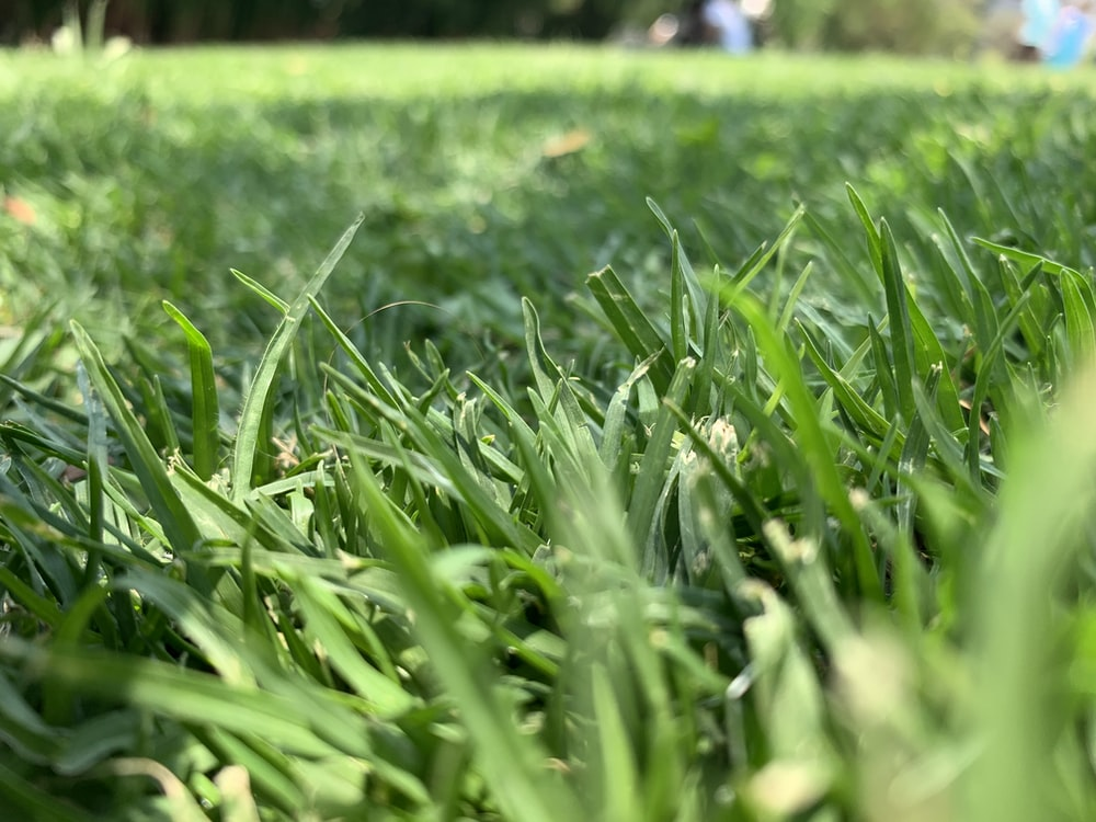 green leafed grass in close-up photo