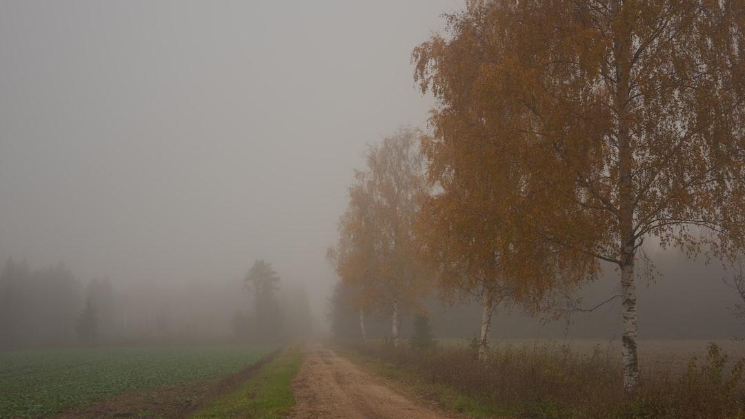 Foggy autumn in Estonia