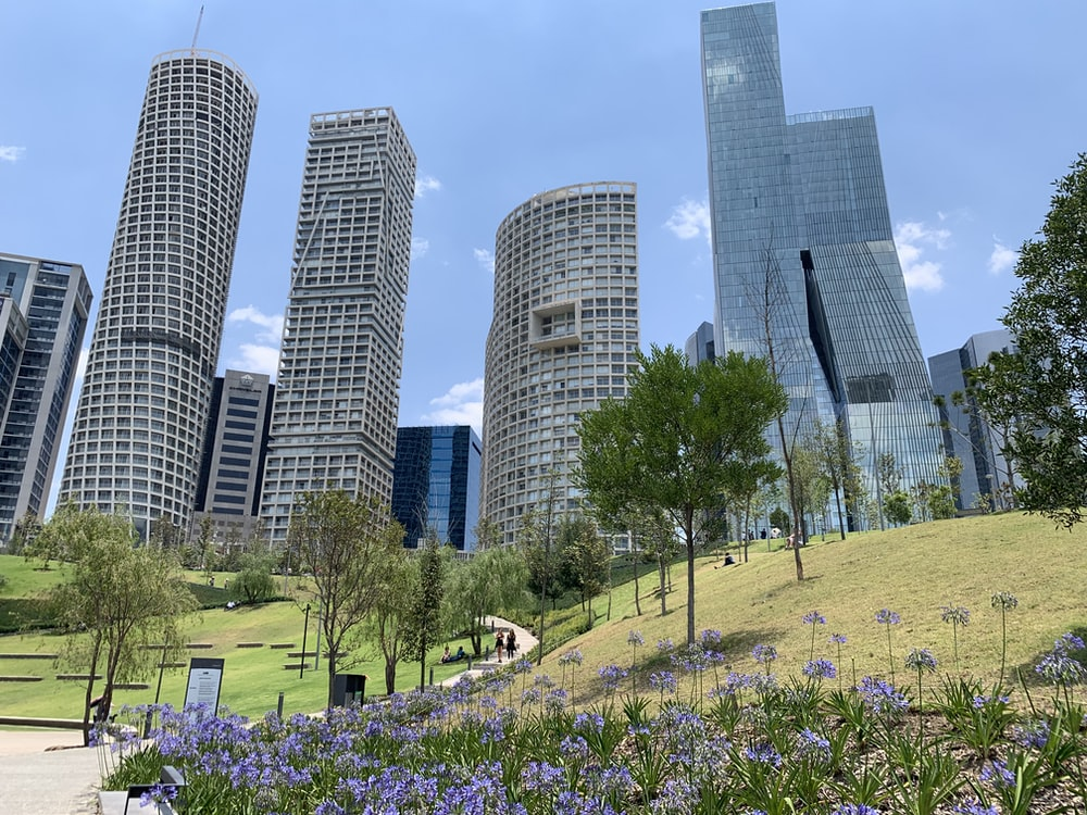 flowers near high-rise buildings