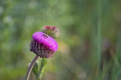 wasp on purple cluster flower