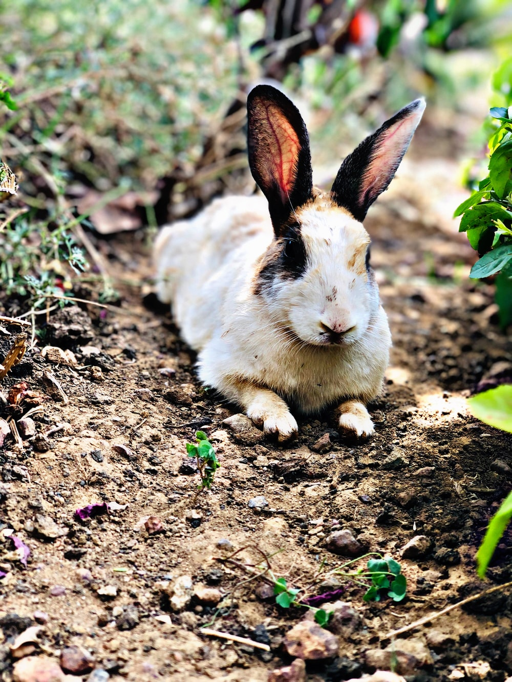 white and brown bunny