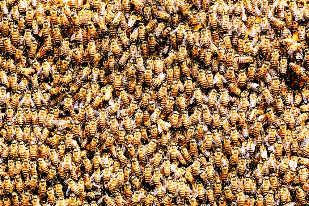 pile of bees