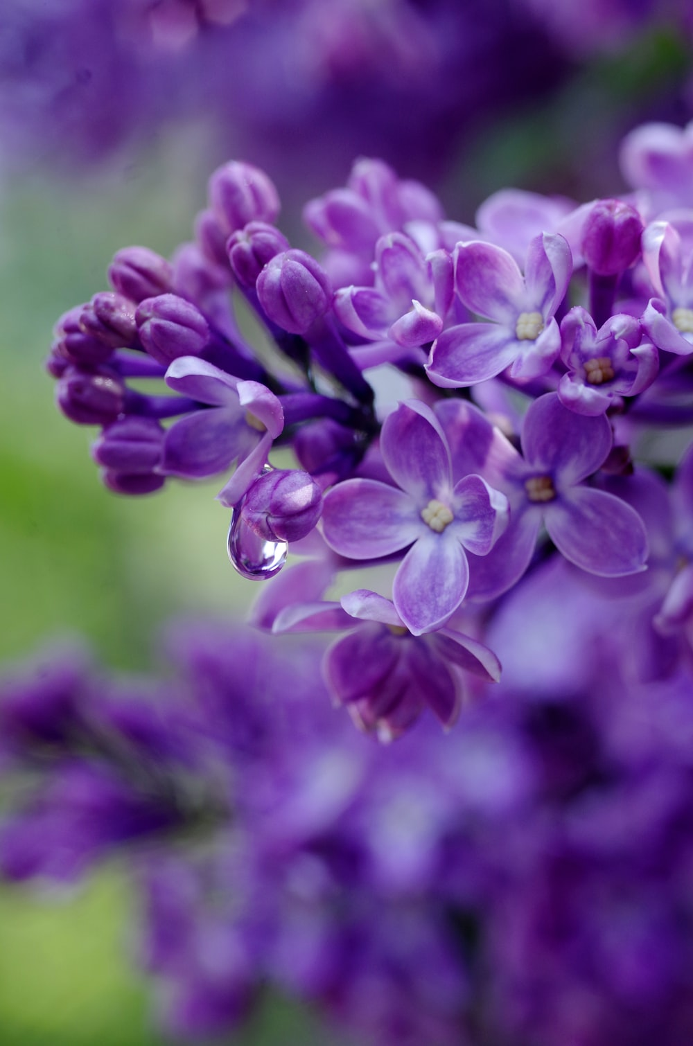 selective focus photography of purple flowers