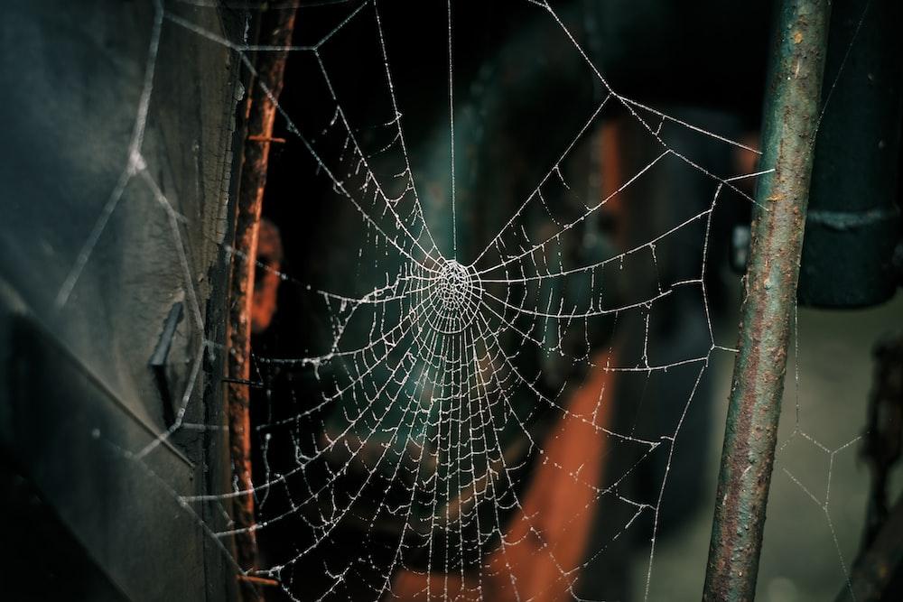 spider web on grey metal bars